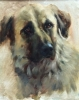 Dog Portrait by Johanne Mangi